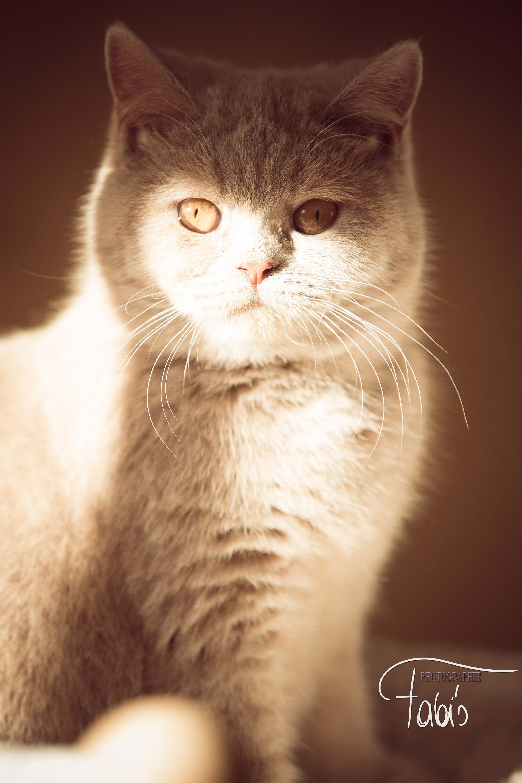 Katzenfoto by Fabiola Pühringer