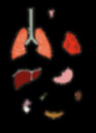 трансплантология 2-01.png