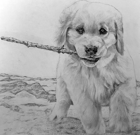 dogwithstick-new.jpg