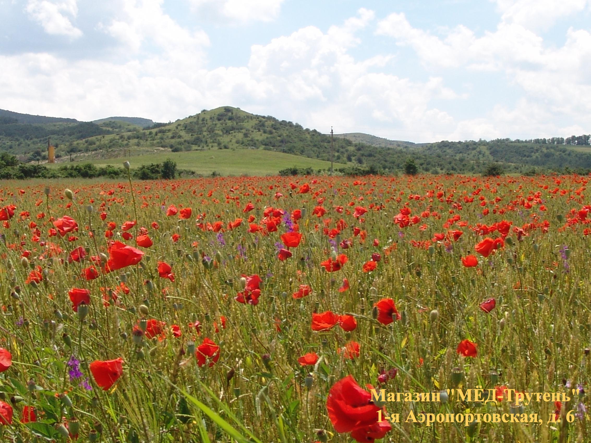 Красные маки  Республики  Крым