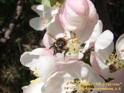 Пчела с лицом