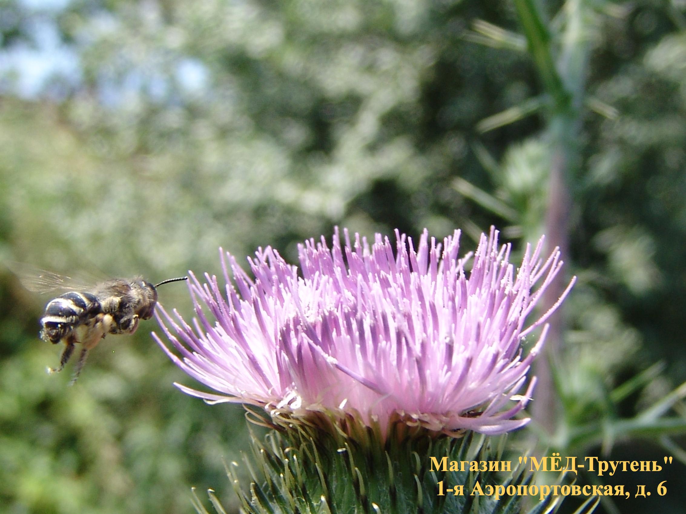 Посадка на цветок. НИИ Пчеловодства