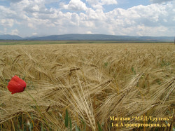 Пшеничное поле и мак