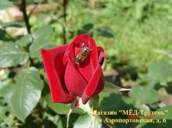 Роза и пчела