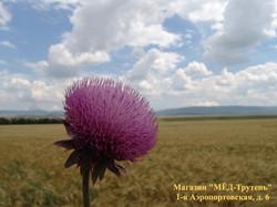Цветок, поле и облака. Крым