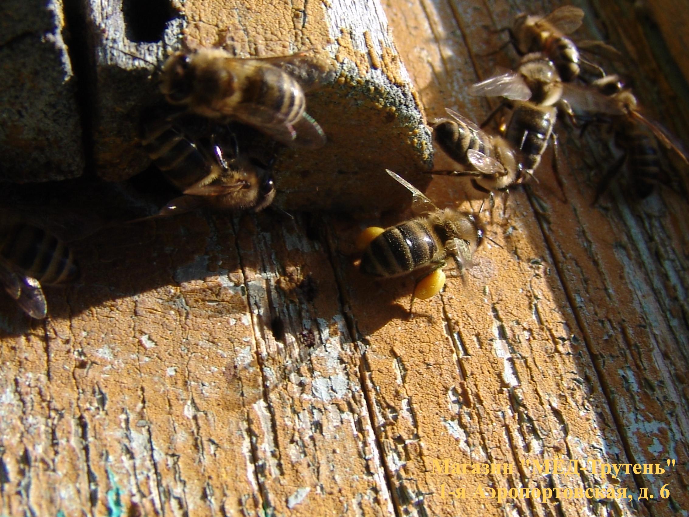 Пчелы с пыльцой на старом улье.jpg