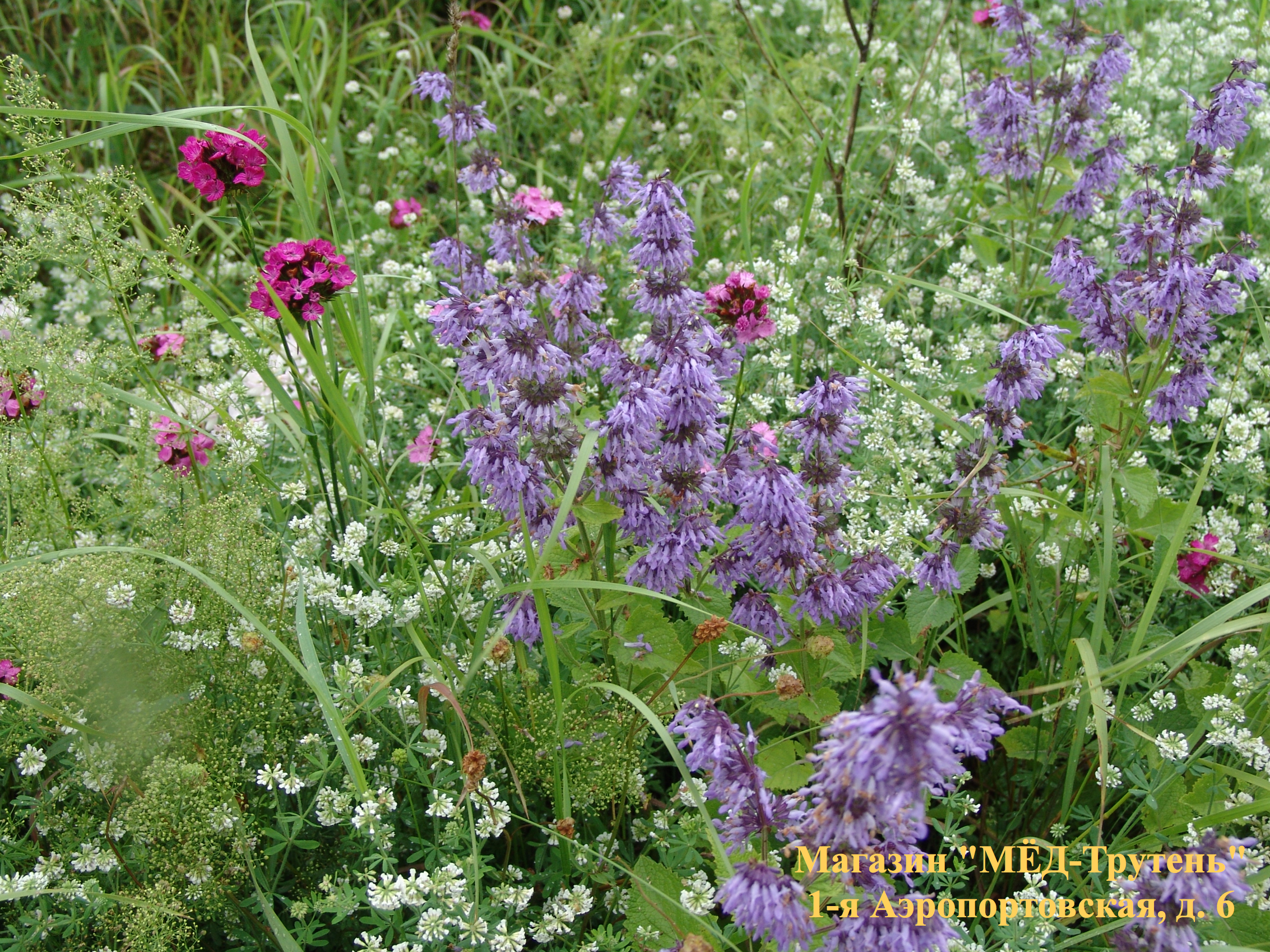 Богатый ассортимент цветов в Крыму