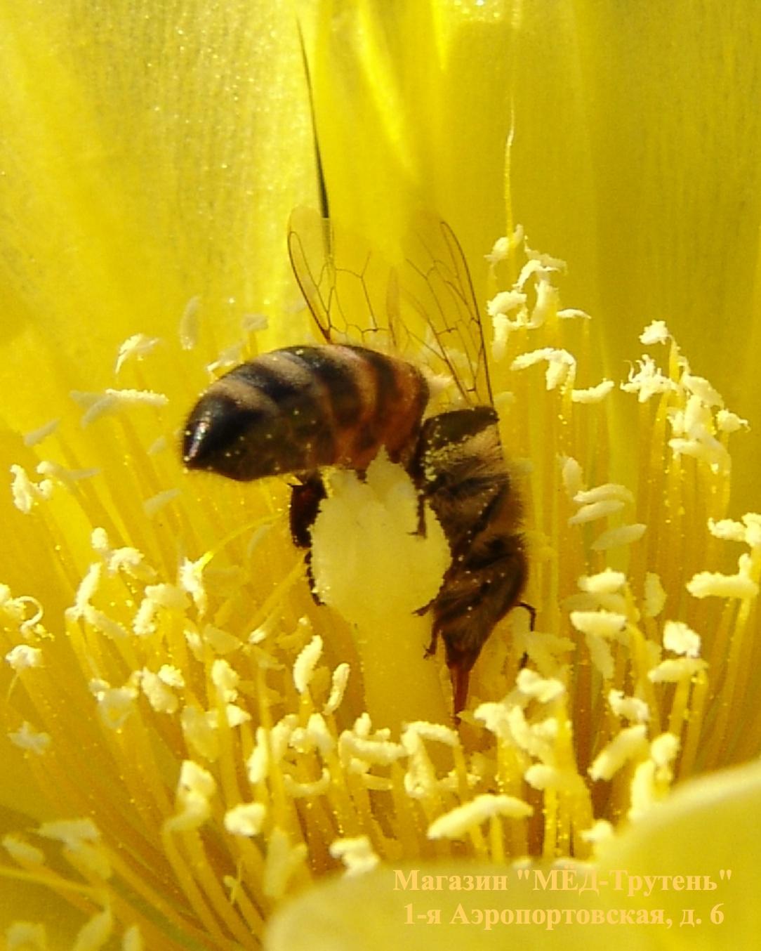 Пчелиное счастье