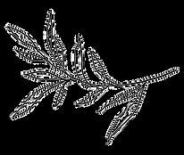 158-1589123_plant-plants-overlay-doddle-