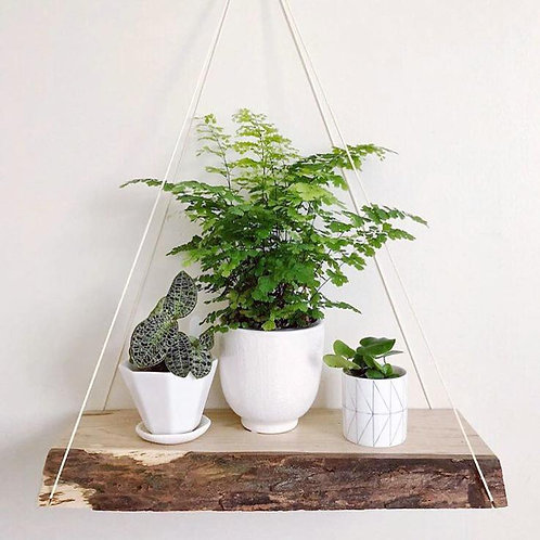 Grab Bag - Hanging Live Edge Shelf