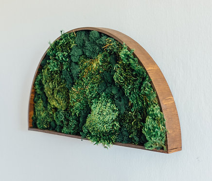 Semi-Circle Moss Wall Art