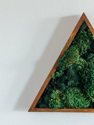 Moss Frame10.jpg