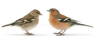 Alyth Bird Blog #4