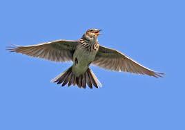 Alyth Bird Blog #5