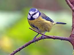 Alyth Bird Blog #6