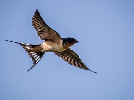 Alyth Bird Blog #1