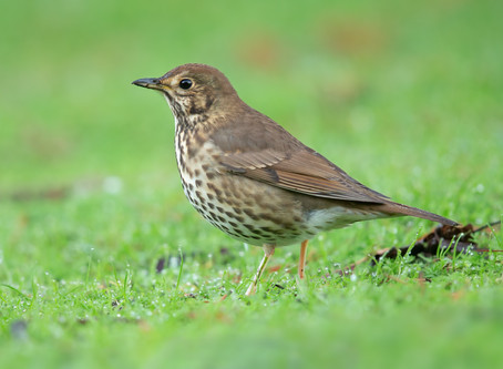 Alyth Bird Blog #2