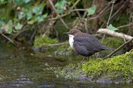 Alyth Bird Blog #8