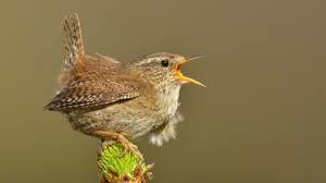 Alyth Bird Blog #7