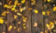 Desktop_Nov2019_FergusFilming_RyanJoyce.