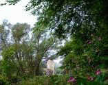 Aboyne_Fog_Summer_Morning_003_09012018.j