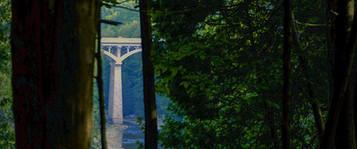 Elora Gorge bridge reveals its self among the trees in historic Elora