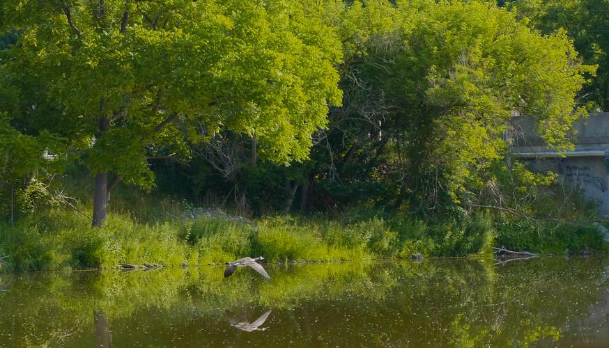 River_Moss_BirdLanding_INCREDIBLE_Low_Br