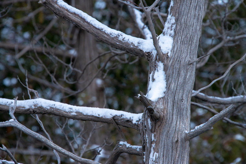 Snow covered trees in the Elora Gorge Conservation area