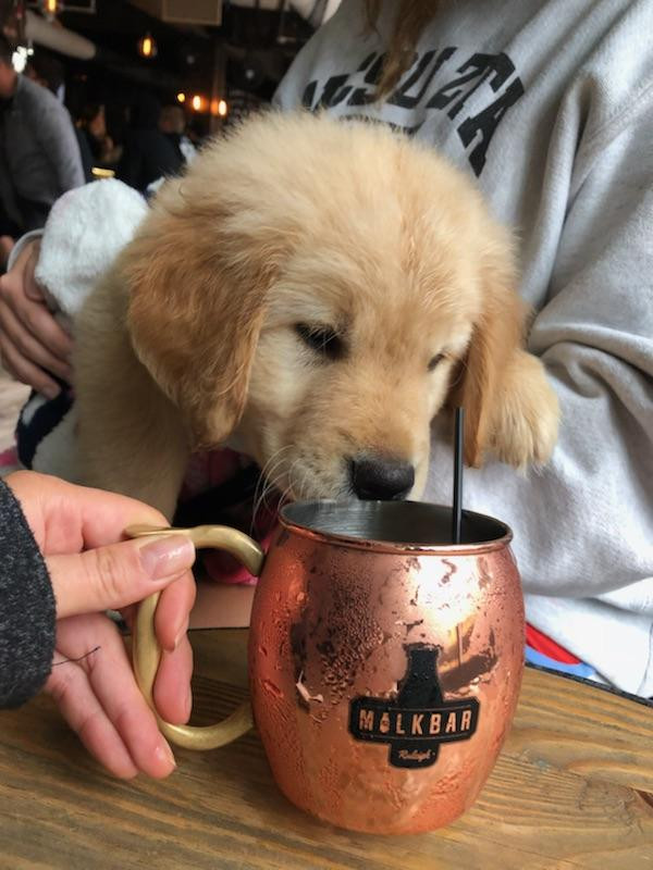 Drop the Pumpkin Spice Latte and Try a Mule