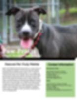Paw Prints Summer Edition 2.0 (PDF)-1.jp