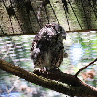 Lee G. Simmons Wildlife Safari owl