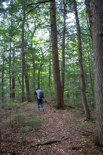Backpacking Hidden Lakes Trail in Chequamegon-Nicolet National Forest