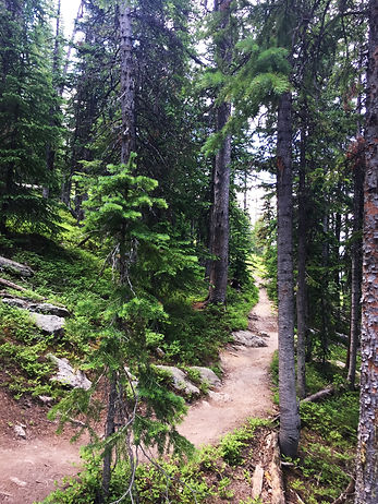 Winter Park Ute Trail