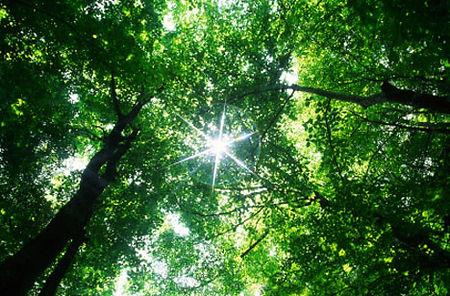 Forest Medecine.jpg