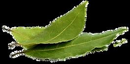 huile-essentielle-laurier-bio-03_edited.