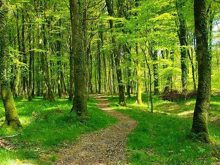 Chemin-forestier.jpg