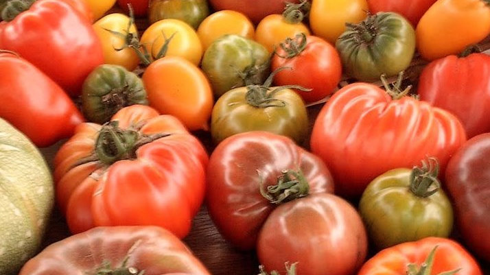 Tomates Côtelée (au kilo)