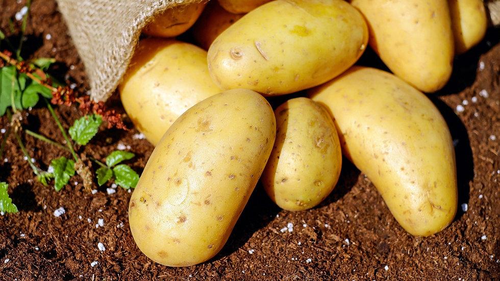 Pommes de Terre - Amandine (au kilo)