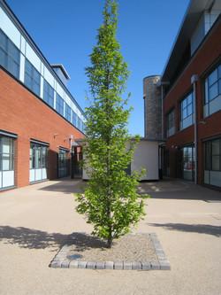 English Oak with Stoneset