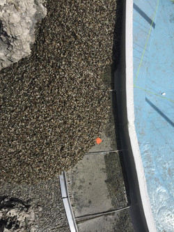 resin rock pool forms