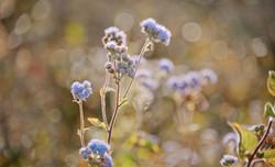 beautiful-blooming-blur-881630