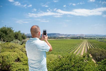Pic of Vineyards.jpg