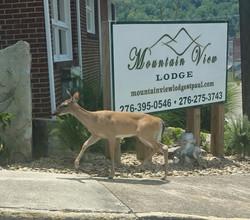 Mountain View Lodge Deer Crossing