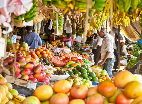 Somalia, The road to self sufficency in Food Production - Somger - | Somalia Agriculture Data