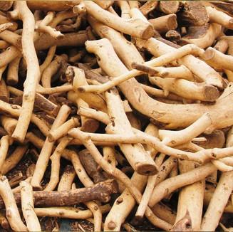 Organic Santal Root