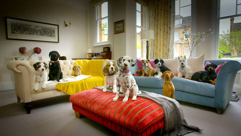 10 Puppies & Us