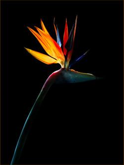 BIRD OF PREY by Lorina Dean 2
