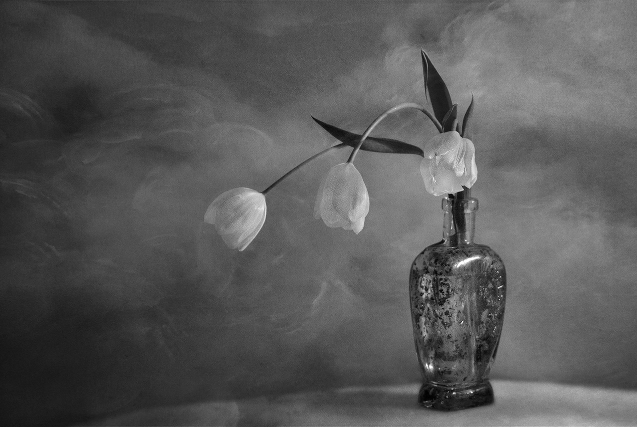 Tulip Trio in Bottle
