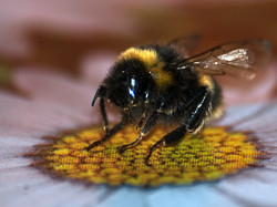 Bumble Bee Stll Life