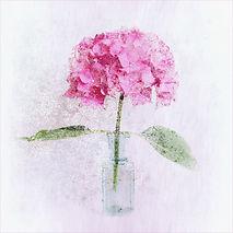 hydrangea 2.jpg